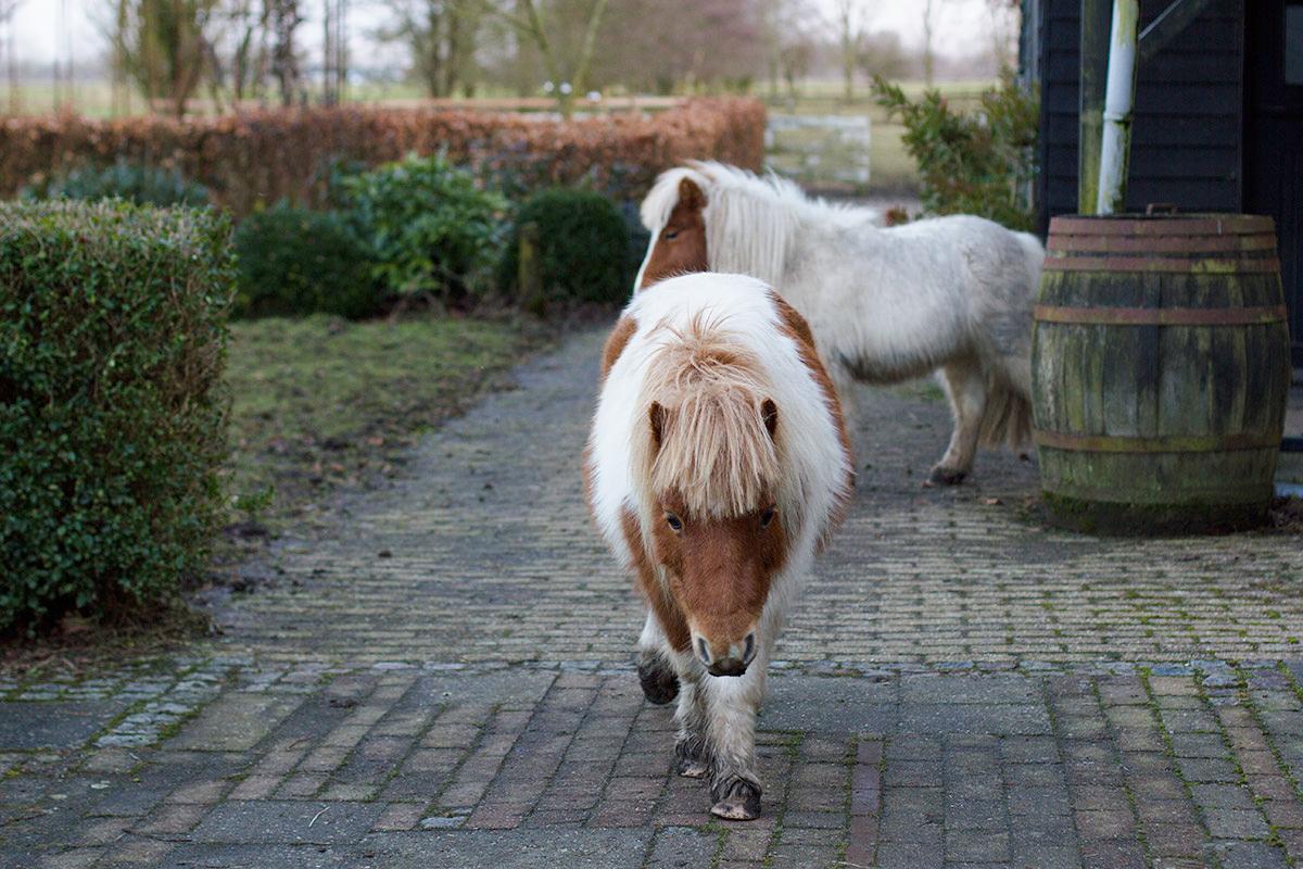op-bezoek-bij-de-minipaarden-11