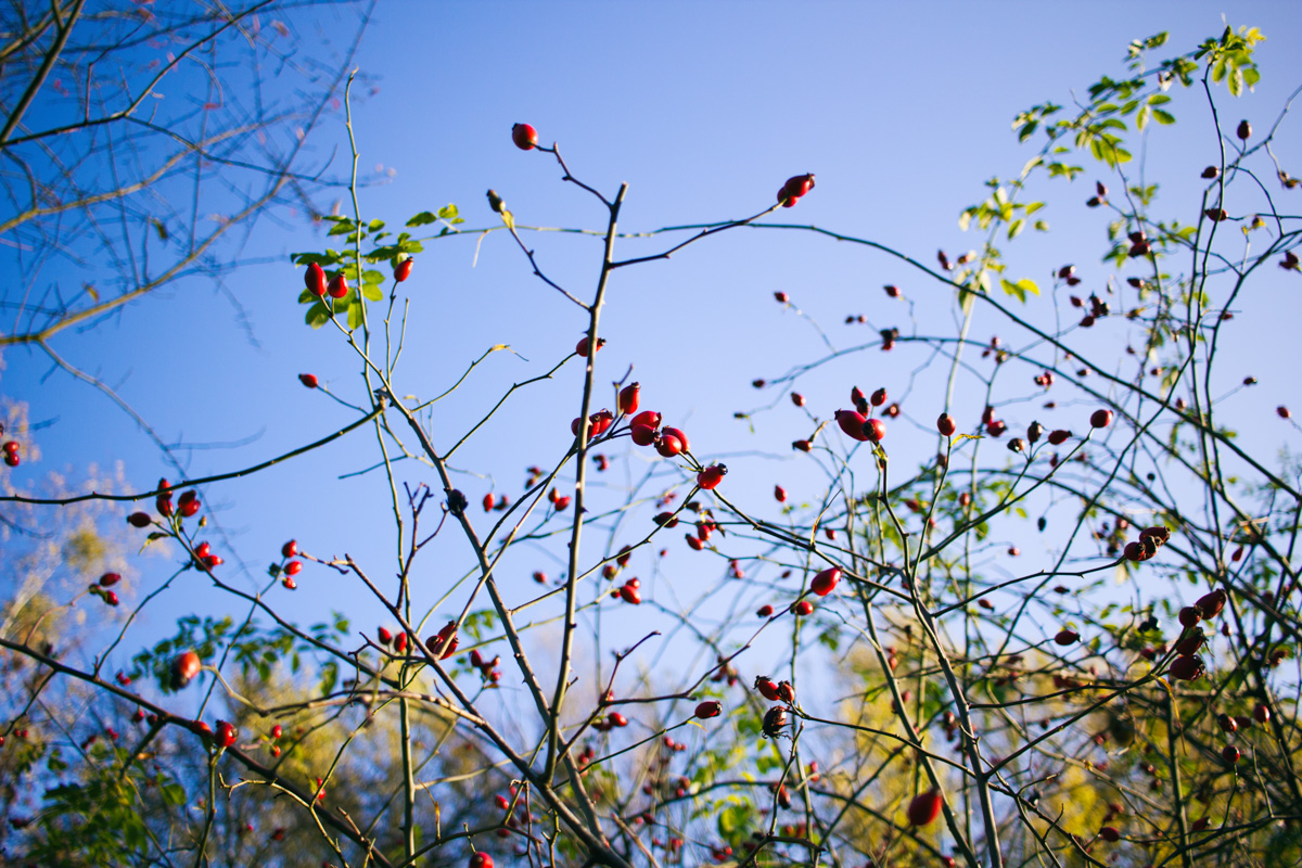 blackbirdsblossom-autumn-walk-Sudgelande-2
