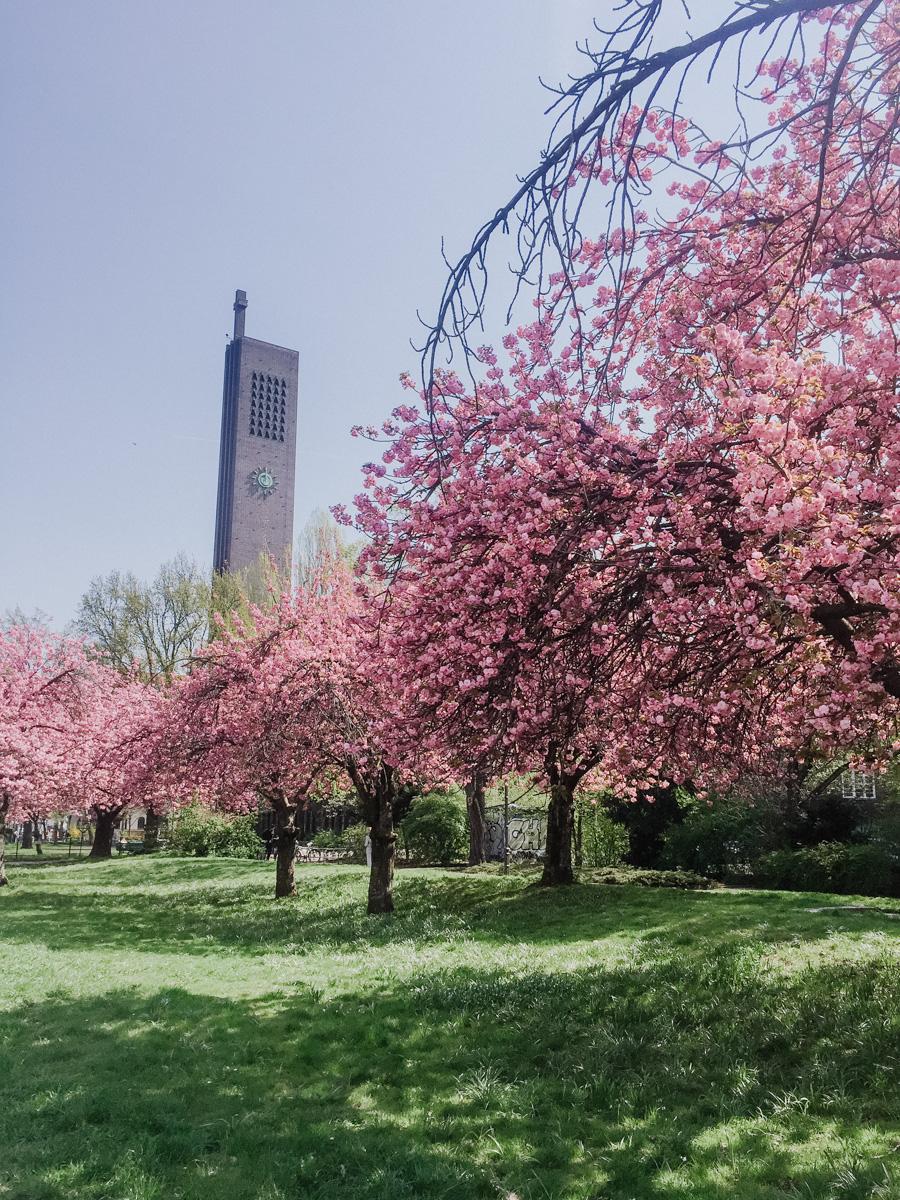 Blossom in Berlin
